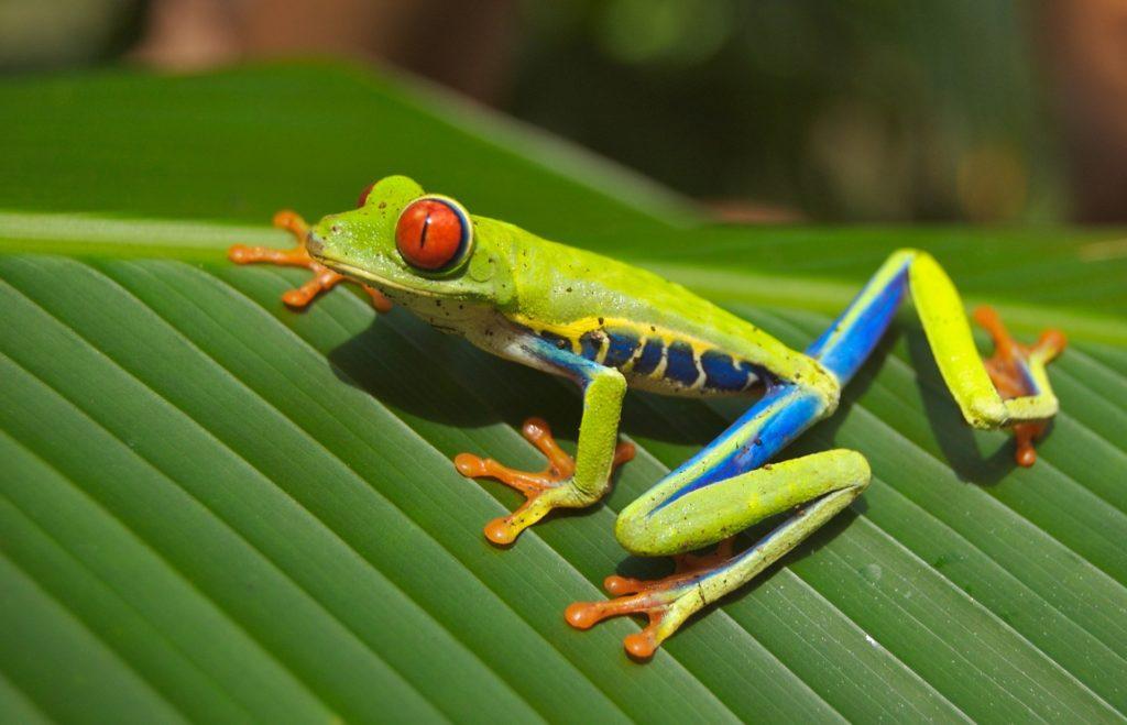 Costa Rica Language Travel